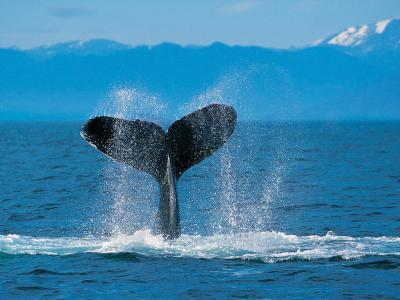 20090623181305-humpback-whale.jpg
