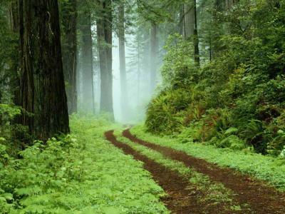 20090624122038-forest.jpg