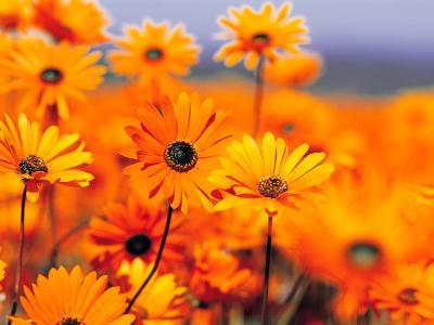 20090625164716-garden.jpg
