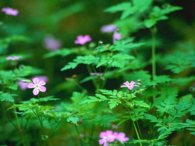 20090626110738-forest-flowers.jpg