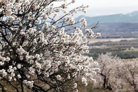 20150310213331-primavera.jpg